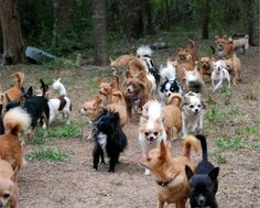 Chihuahuas of the wild!!!