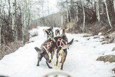 Dog sledding near Park City, Utah with mushing magazine   www.micahkvidt.com