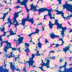 flower background steam
