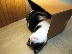 I meant for box to fall dis way cause now is nap time