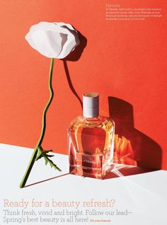 Risultati immagini per daylight perfume strong shadow still life