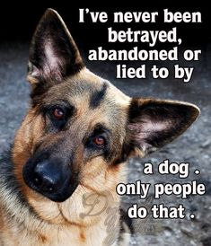 The German Shepherd #germanshepherd Pet Loss Grief, I Love Dogs, All Dogs, Dogs And Puppies, Doggies, Funny Dog Pictures, Dog Quotes, German Shepherd Dogs, German Shepherds