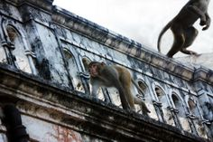 তুমি হামি সকলে  পয়সার বদলে বান্দর হয়ে নাচি ..   কেউ নাচে বাড়ীতে কেউ নাচে গাড়িতে ..   কেউ বা পথে পথে দেখায় বান্দর নাচ .. we are all monkey ..  dancing different  way in the kaleidoscopic stage of the planet .. copyright:abdul malek babul