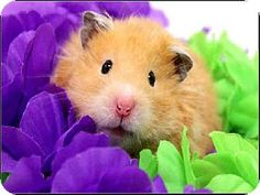 Pet Adoption has dogs, puppies, cats, and kittens for adoption. Adopt a pet Dedham Massachusetts, What Is Cute, Hamster Care, Pet Organization, Cute Hamsters, Favorite Pastime, Pet Adoption, Habitats, Cute Animals