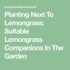 Planting Next To Lemongrass: Suitable Lemongrass Companions In The Garden