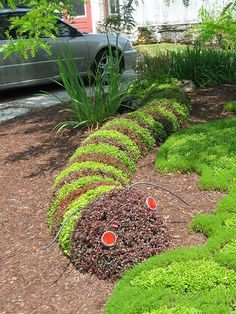 caterpillar topiary @brookeralston you should talk your mom into letting you do this lol