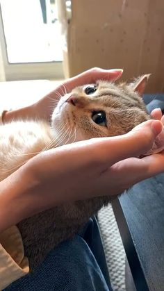 Cute Little Animals, Cute Funny Animals, Cute Cats, Funny Cats, Kittens Cutest, Cats And Kittens, Gato Gif, Cat Tags, Cute Animal Videos