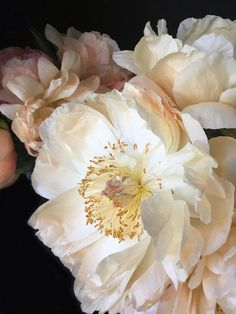 Late June and I will be rich with peonies. My Flower, White Flowers, Flower Art, Beautiful Flowers, White Peonies, Small Flowers, Herb Garden Design, Diy Herb Garden, Flower Aesthetic