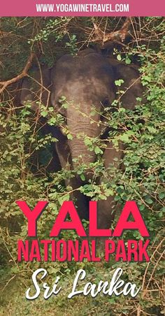 Yogawinetravel.com: Discover Yala National Park in Sri Lanka - What You Need to Know. Sri Lanka possesses an extremely high degree of biodiversity and is considered one of the top biodiversity hotspots in the world. Yala National Park is the second largest and most visited park in Sri Lanka, read on for what you need to know about going on a wildlife safari and visiting the animals in their natural habitat!