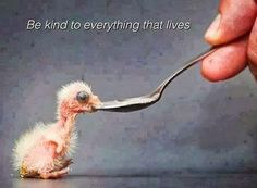"A Flamingo Chick:  ""Be kind to everything that lives, ensuring that fragile life survives and thrives."""