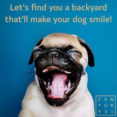 #WoofWednesday  For all your property needs contact us on eastlondon@century21.co.za  BUY | SELL | RENT | AUCTION www.century21.co.za A Worldwide Leader In Real Estate #Century21 #Buy #Sell #Rent #Auction #WorldwideLeaders Funny Animal Videos, Videos Funny, Animal Tumblr, Love Illustration, Smiling Dogs, Ocean Themes, Teaching Strategies, Your Dog, Auction