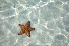 Biólogos de la Universidad Queen Mary de Londres (QMUL, por sus siglas en inglés), en Reino Unido, han descubierto los genes en las estrellas de mar que...