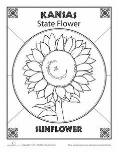 Worksheets: Kansas State Flower