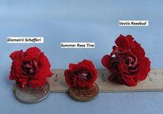 Bilderesultat for summer Rose tina