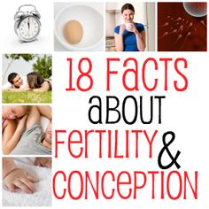 Facts about Fertility and Conception   Being Pregnant