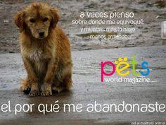 No los abandones 😨no los maltrates 🙏🏽  #PetsWorldMagazine #RevistaDeMascotas #Panama #Mascotas #MascotasPanama #MascotasPty #PetsMagazine #Mensajes #NoAlMaltratoAnimal #NoLosAbandones
