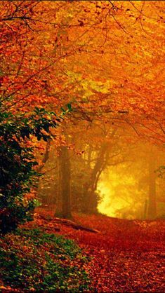 The Fall light at the end of the tunnel. More