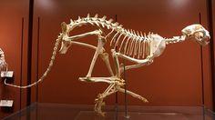 Cheetah skeleton. Spring loaded