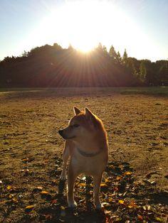 Sunrise   日の出