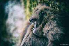 Untitled by Mariano Desole Nature Photos, My Photos, Fine Art Photography, Animals, Pictures, Animales, Art Photography, Animaux, Animal