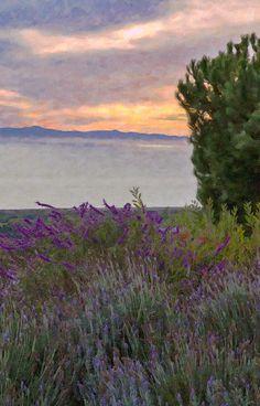 #salviatothesea original painting © David Millenheft