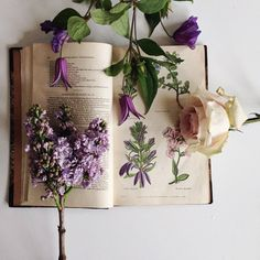 Lilac and Rose My Flower, Beautiful Flowers, Beautiful Images, Bouquet, Botany, Holi, Planting Flowers, Floral Arrangements, Illustration