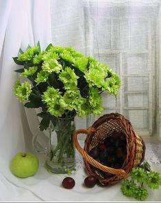 Gerbera, Planter Pots