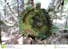Photo about A beautiful abstract image of the end of a cut tree covered in a variety of moss and lichen of different shades and textures of green. Image of rings, shades, different - 102218518 Abstract Images, Stock Photos, Texture, Beautiful, Green, Art, Surface Finish, Art Background, Kunst