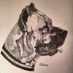 Portrait of octane