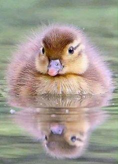 Nature Animals, Farm Animals, Animals And Pets, Funny Animals, Cute Animals, Bird Pictures, Cute Animal Pictures, Beautiful Creatures, Animals Beautiful