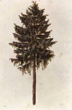 Pine    Albrecht Durer