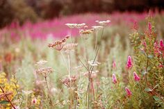 by Charlotte Louise Evans, via Flickr