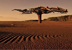 This unique tree is buried in the ground upside down. What you see is the root system of the tree that is 5-6 meters n diameter. Kama River