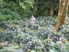 our coffee farm