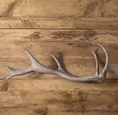 Horns & Antlers   RH