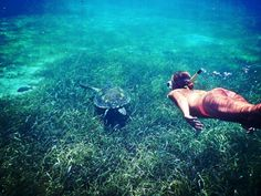 Sea turtles are a very prominent site while snorkeling in Belize #Belize #Snorkeling #Belize Vacation #Belize Resorts