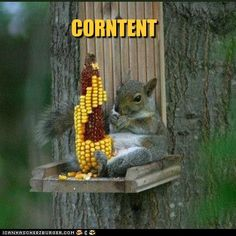 Corntentment