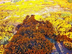 Namaqua spring flowers in the Northern Cape, South Africa Spring Flowers, Wild Flowers, Motorcycle Travel, Adventure Activities, Africa Travel, West Coast, South Africa, Country Roads, Biking