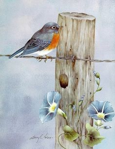 fasci-arte: Sherry C. Bird Pictures, Pictures To Paint, Watercolor Bird, Watercolor Paintings, Pintura Tole, China Painting, Tole Painting, Bird Drawings, Learn To Paint