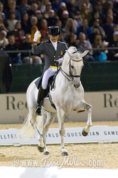 Fuego XII - Andalusian stallion looking great!