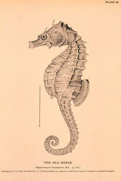 Vintage Printable - free printable art by whitney3737