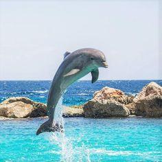 Animali marini. Come saprai, la maggior parte della superficie del pianeta è composta d'acqua, per questo motivo gli oceani ospitano una grande quantità di animali. Di fatto, secondo gl...