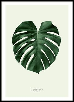 Botanical posters with green leaves...