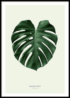 Een stijlvolle poster met een mooi groen gatenplant blad. De sobere kleuren zorgen ervoor dat het motief goed past bij verschillende interieurstijlen en past bij zowel een moderne als klassieke stijl. In onze categorie Botanisch kunt u meer motieven met foto's en illustraties van planten, bloemen en kruiden vinden. www.desenio.nl