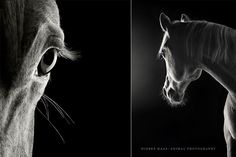 Animals are perhaps one of the most difficult photography subjects to work with–you can't exactly ask a cat to smile for the camera and expect it to happen. Photographing equine models comes with its own set of challenges, as one attempts to communicate the intrinsic grace and beauty of these large, flighty beasts. German photographer …