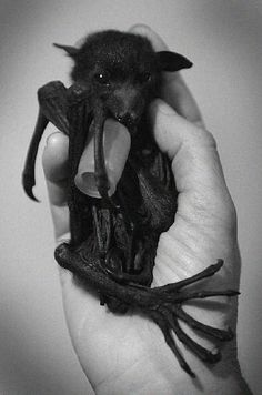 Why are people afraid of bats? They're harmless, provided you stay away from guano, and such interesting creatures.