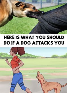 Dog bites are quite common, but how should one react when a dog attacks? Here Is What You Should Do If a Dog Attacks You!