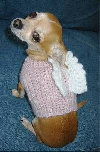 Little Chihuahua Angel!
