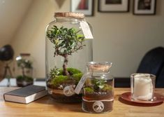 Terrarium, Ficus, Plants, Gardens, Decor, Wrapping, Recyle, Creative, Terrariums