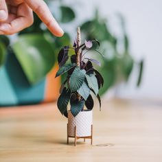 Paper artist Raya Sader Bujana crafts handmade plant sculptures that you can hold between your two fingers. Learn about her meticulous process here. Big House Plants, Book Sculpture, Paper Sculptures, Driftwood Sculpture, Paper Plants, Folded Book Art, Book Folding, Mini Plants, Miniature Plants